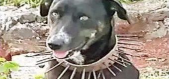 कुत्ते को तेंदुए से बचाने के लिए खोजी नायाब तरकीब