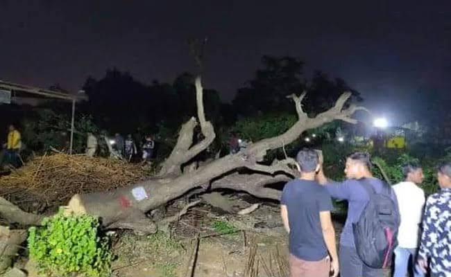 मुंबई में पेड़ों की कटाई को लेकर हुआ जबरदस्त हंगामा
