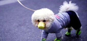 कोरोनावायरस से मनुष्य ही नहीं जानवर भी हुए प्रभावित, कुत्ते की मौत का पहला मामला आया सामने