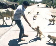 लॉकडाउन के दौरान बेजुबान जानवरों की नियमित सेवा कर रहा 'माताजी सेवा संस्थान'