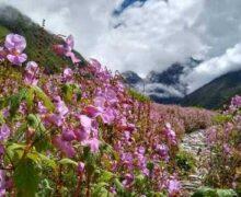 1 जून से सैलानियों के लिए खुलेगा फूलों की घाटी का ट्रेक