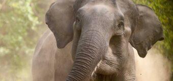 हाथी ने बुज़ुर्ग व्यक्ति को कुचलकर उतारा मौत के घाट