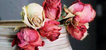 घर के भीतर कभी न रखें सूखे या मुरझाए हुए फूल, ये है वजह