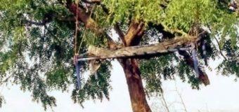यहाँ इंसाफ़ के लिए शव को लटका देते हैं पेड़ से