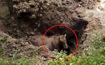 बिहार में नील गाय को ज़िंदा दफ़नाया, लोगों ने जताया गुस्सा